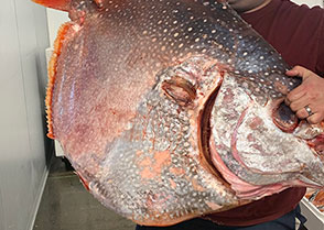 Mike and the Opah