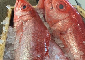 Onaga Long Tailed Snapper