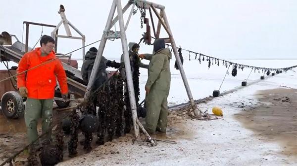 Winter Mussel Farming Video